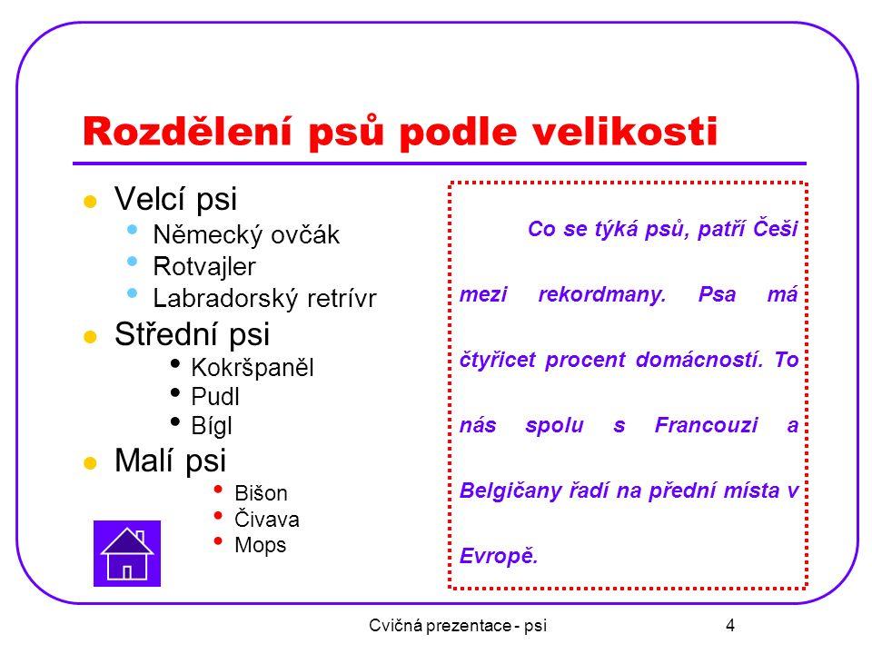 Cvičná prezentace - psi 4 Rozdělení psů podle velikosti Velcí psi Německý ovčák Rotvajler Labradorský retrívr Střední psi Kokršpaněl Pudl Bígl Malí ps