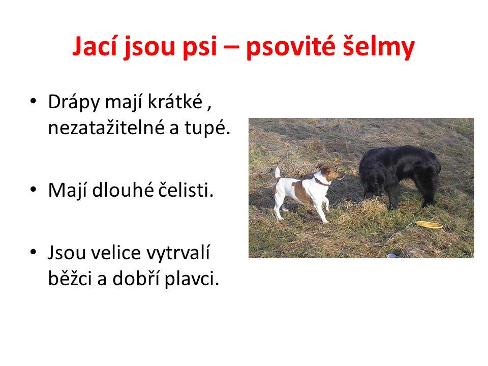 Jací jsou psi – psovité šelmy Drápy mají krátké, nezatažitelné a tupé.