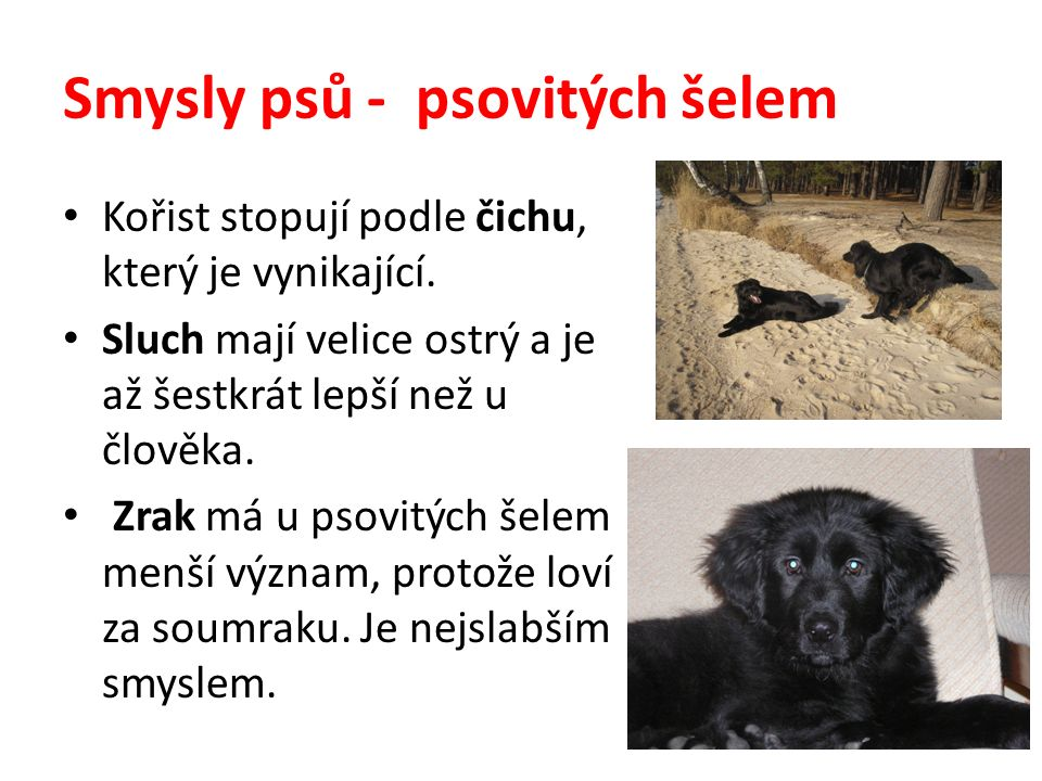 Pes a člověk Pes má v lidských službách mnohostranné použití.
