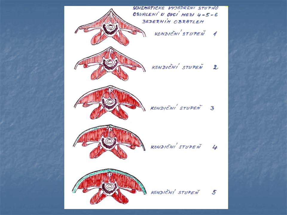 Příprava ovcí k inseminaci Folikulární fáze 2 – 3 dny: růst folikulů Folikulární fáze 2 – 3 dny: růst folikulů Luteální fáze 14 – 15 dní: sekrece progesteronu Luteální fáze 14 – 15 dní: sekrece progesteronu Délka říje 1 – 1,5 dne Délka říje 1 – 1,5 dne Tichá říje  vyhledávání pomocí prubíře 1-2x denně Tichá říje  vyhledávání pomocí prubíře 1-2x denně Na 40 – 50 ovcí jeden prubíř, opatří se zástěrkou, případně značkovacím postrojem Na 40 – 50 ovcí jeden prubíř, opatří se zástěrkou, případně značkovacím postrojem Prubíři vyžadují zvýšenou pozornost – hygiena zástěrky Prubíři vyžadují zvýšenou pozornost – hygiena zástěrky