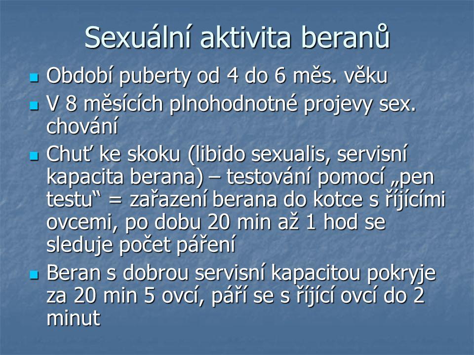 Sexuální aktivita beranů Období puberty od 4 do 6 měs. věku Období puberty od 4 do 6 měs. věku V 8 měsících plnohodnotné projevy sex. chování V 8 měsí