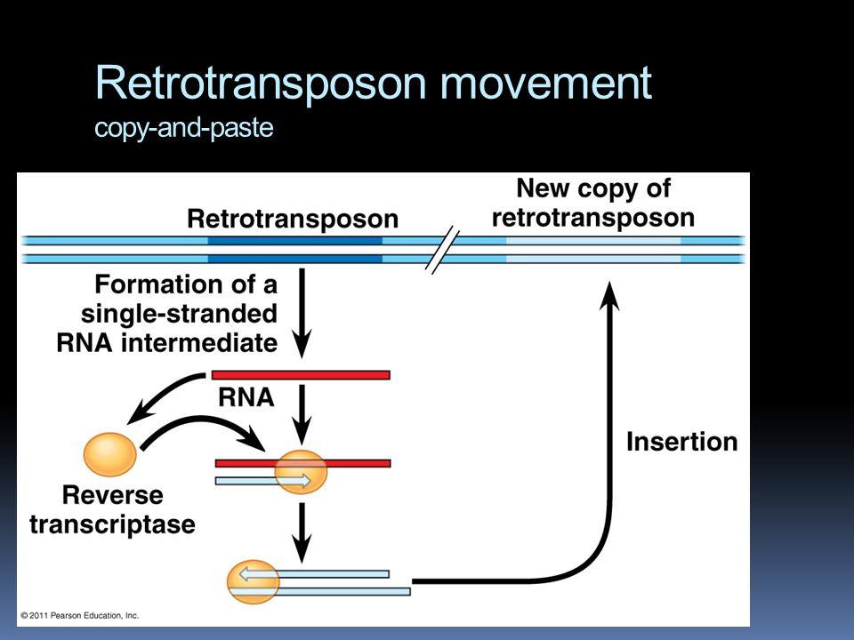 Retrotransposon movement copy-and-paste