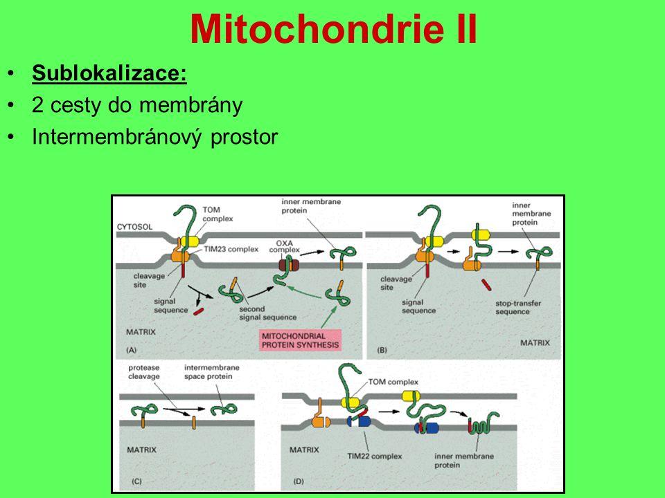 Mitochondrie II Sublokalizace: 2 cesty do membrány Intermembránový prostor