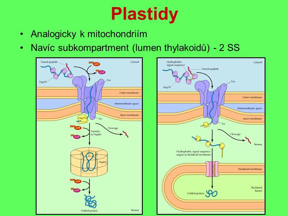 Plastidy Analogicky k mitochondriím Navíc subkompartment (lumen thylakoidů) - 2 SS