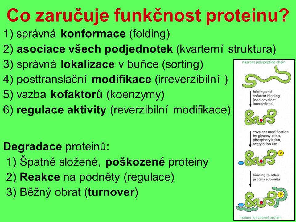 Co zaručuje funkčnost proteinu.
