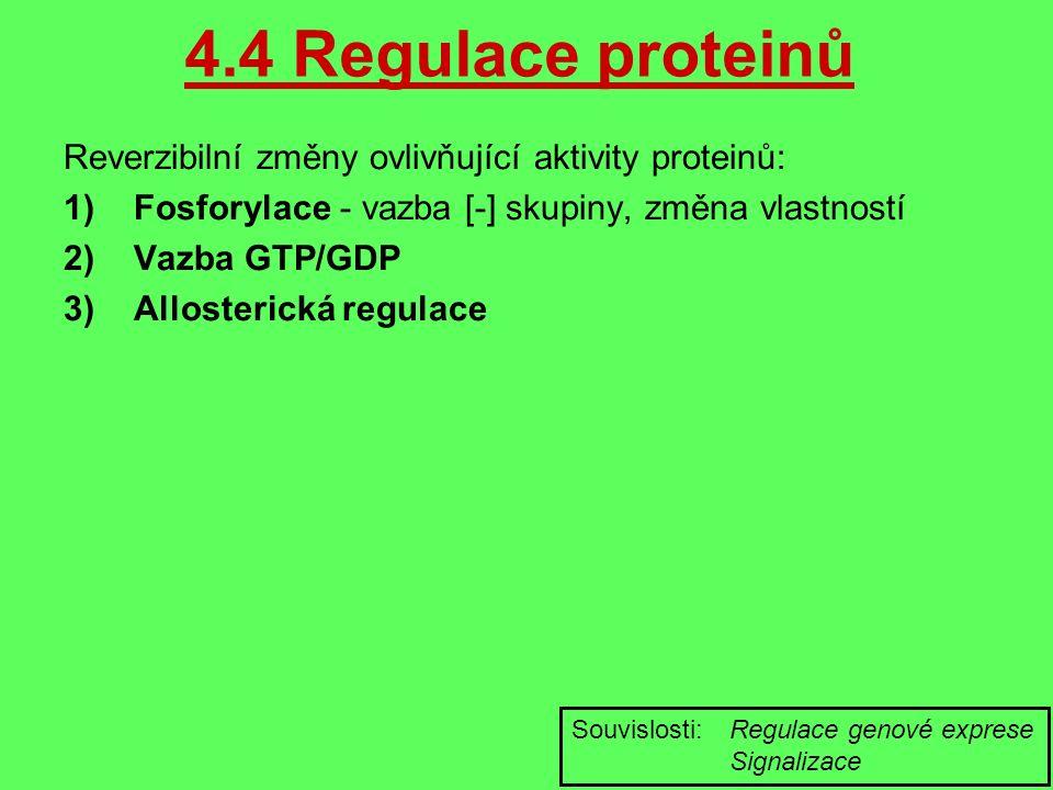 4.4 Regulace proteinů Reverzibilní změny ovlivňující aktivity proteinů: 1)Fosforylace - vazba [-] skupiny, změna vlastností 2)Vazba GTP/GDP 3)Allosterická regulace Souvislosti: Regulace genové exprese Signalizace