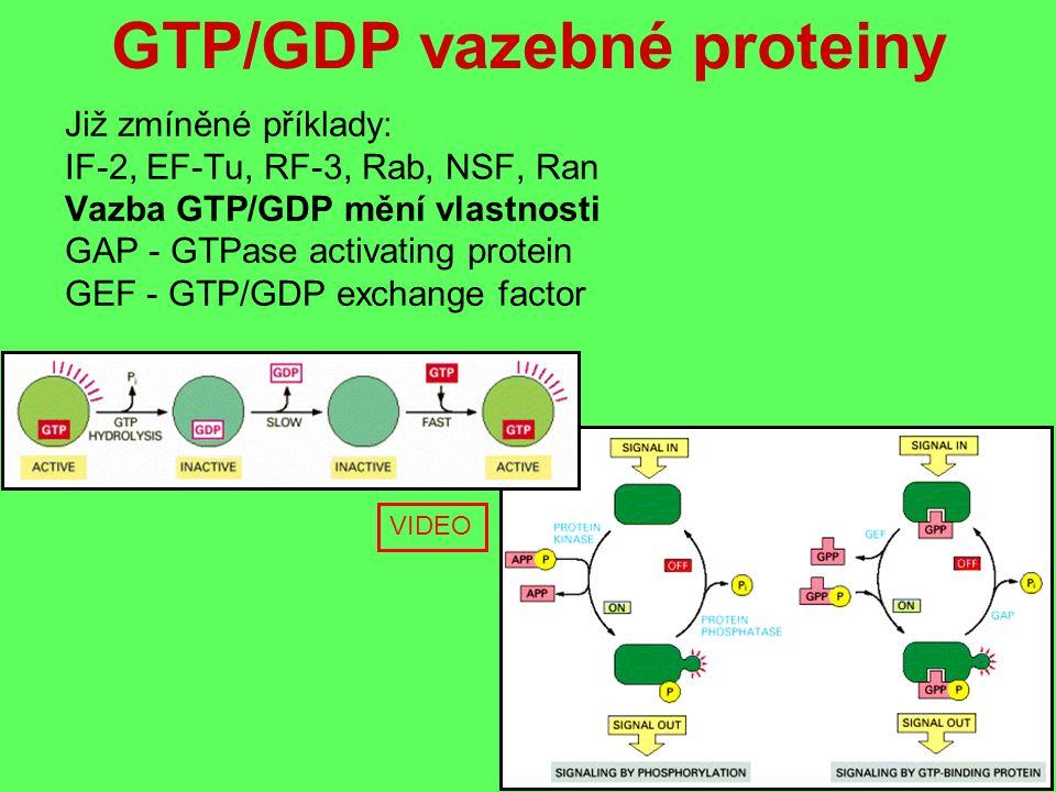 GTP/GDP vazebné proteiny Již zmíněné příklady: IF-2, EF-Tu, RF-3, Rab, NSF, Ran Vazba GTP/GDP mění vlastnosti GAP - GTPase activating protein GEF - GTP/GDP exchange factor VIDEO
