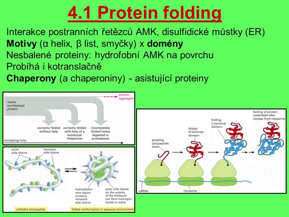 4.1 Protein folding Interakce postranních řetězců AMK, disulfidické můstky (ER) Motivy (α helix, β list, smyčky) x domény Nesbalené proteiny: hydrofobní AMK na povrchu Probíhá i kotranslačně Chaperony (a chaperoniny) - asistující proteiny