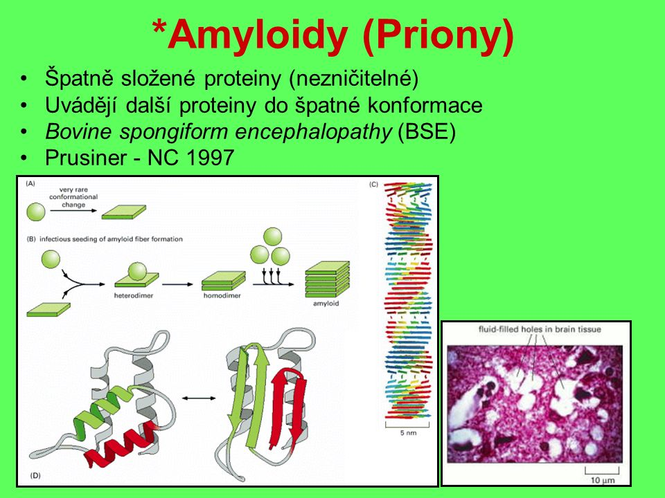 *Amyloidy (Priony) Špatně složené proteiny (nezničitelné) Uvádějí další proteiny do špatné konformace Bovine spongiform encephalopathy (BSE) Prusiner - NC 1997