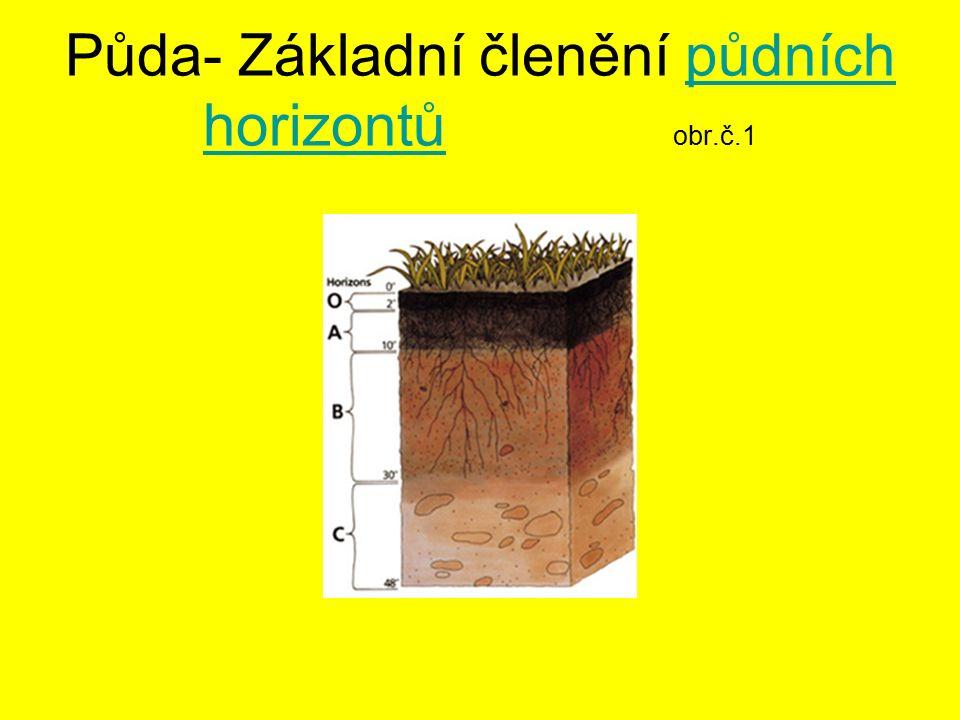 Základní diagnostické horizonty O - nadložní organický horizont A - humusový horizont B - metamorfický horizont C - půdotvorný substrát O - nadložní organický horizont A - humusový horizont B - metamorfický horizont C - půdotvorný substrát