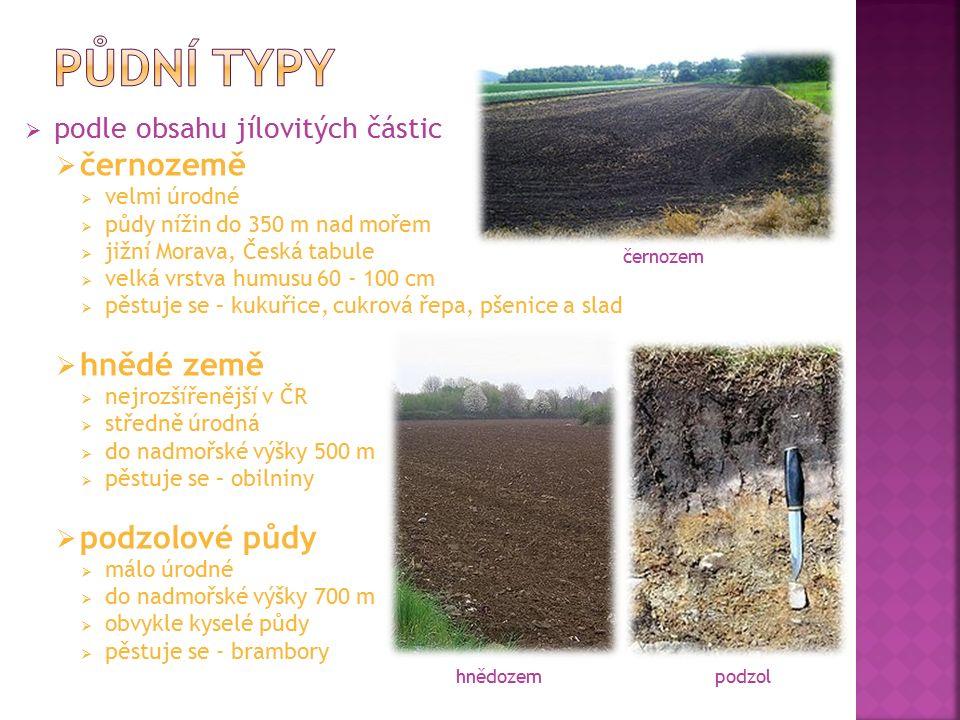 podle obsahu jílovitých částic  černozemě  velmi úrodné  půdy nížin do 350 m nad mořem  jižní Morava, Česká tabule  velká vrstva humusu 60 - 10