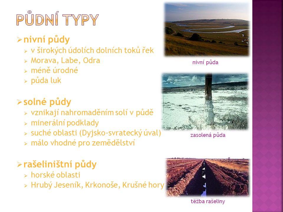  nivní půdy  v širokých údolích dolních toků řek  Morava, Labe, Odra  méně úrodné  půda luk  solné půdy  vznikají nahromaděním solí v půdě  mi