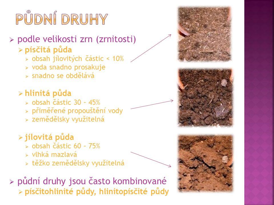  podle velikosti zrn (zrnitosti)  písčitá půda  obsah jílovitých částic < 10%  voda snadno prosakuje  snadno se obdělává  hlinitá půda  obsah částic 30 – 45%  přiměřené propouštění vody  zemědělsky využitelná  jílovitá půda  obsah částic 60 – 75%  vlhká mazlavá  těžko zemědělsky využitelná  půdní druhy jsou často kombinované  písčitohlinité půdy, hlinitopísčité půdy