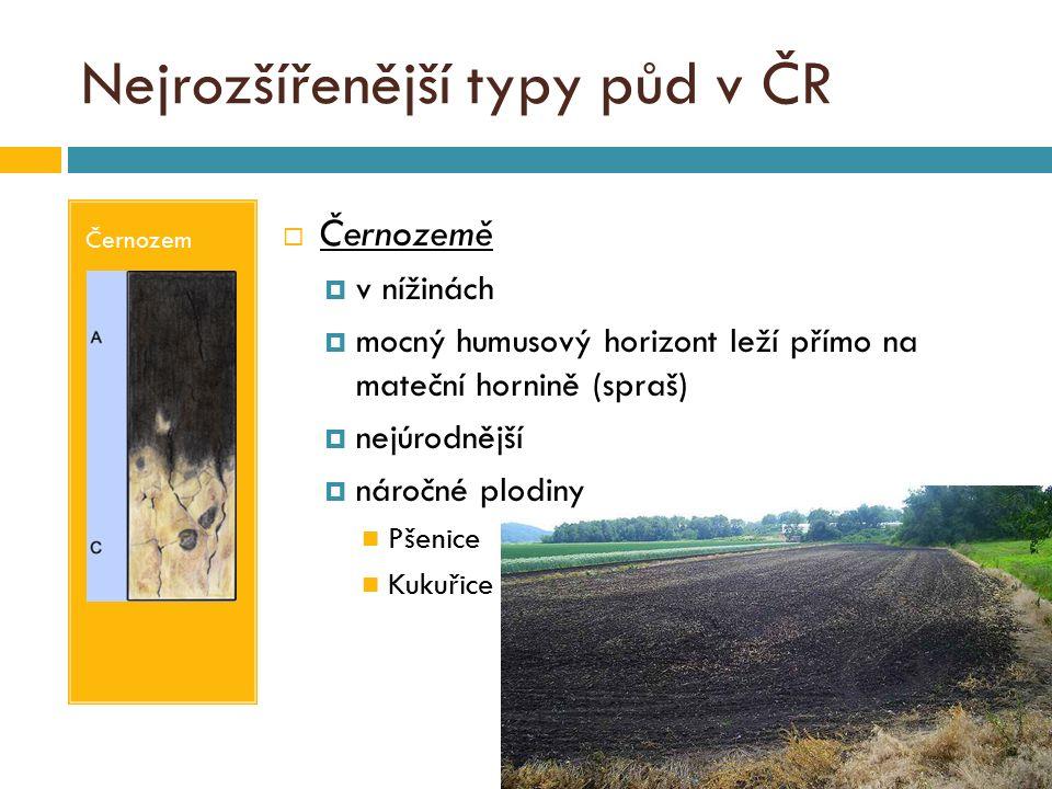 Nejrozšířenější typy půd v ČR Hnědá půda  Hnědé půdy (kambizemě)  v pahorkatinách, vrchovinách a hornatinách  využití pro pastviny a lesy  Hnědozemě  v nízkých pahorkatinách, obklopují nížiny  humusový horizont do 30 cm  mateční hornina spraš  Nivní půdy (fluvizemě)  na náplavech velkých řek, louky