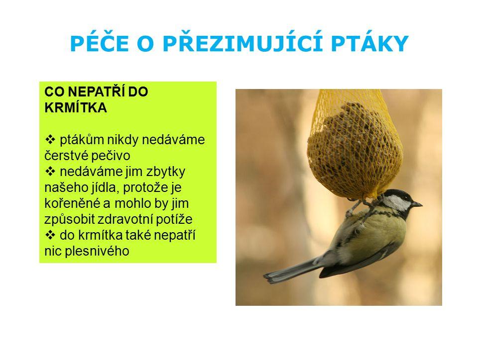 PÉČE O PŘEZIMUJÍCÍ PTÁKY CO NEPATŘÍ DO KRMÍTKA  ptákům nikdy nedáváme čerstvé pečivo  nedáváme jim zbytky našeho jídla, protože je kořeněné a mohlo
