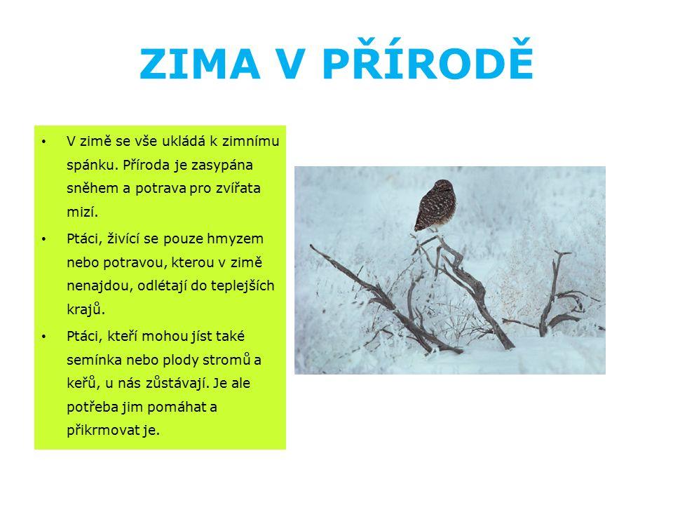 ZIMA V PŘÍRODĚ V zimě se vše ukládá k zimnímu spánku. Příroda je zasypána sněhem a potrava pro zvířata mizí. Ptáci, živící se pouze hmyzem nebo potrav