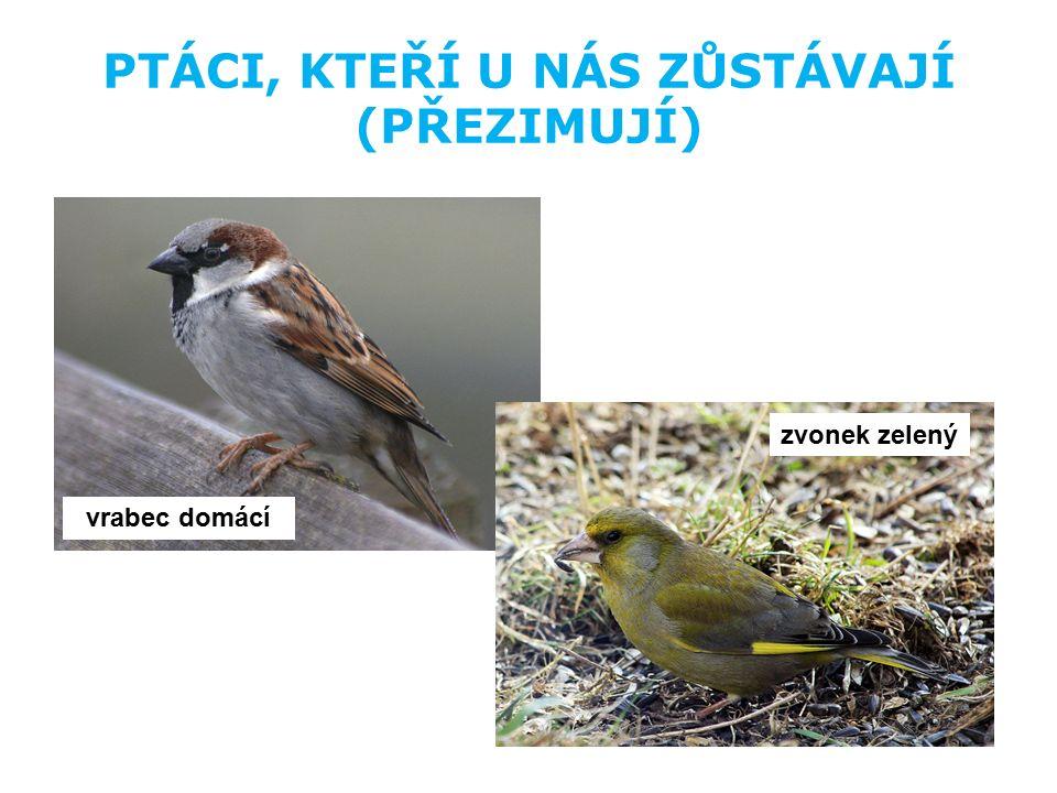 KONTROLNÍ OTÁZKY 1.Jak se říká ptákům, kteří u nás zůstávají přes zimu.