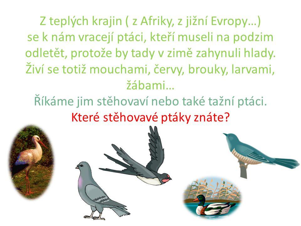 Z teplých krajin ( z Afriky, z jižní Evropy…) se k nám vracejí ptáci, kteří museli na podzim odletět, protože by tady v zimě zahynuli hlady.