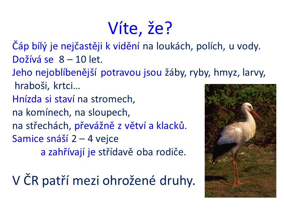 Víte, že.Vlaštovka obecná má ocas vykrojený do vidličky, dlouhá špičatá křídla, bílé břicho.