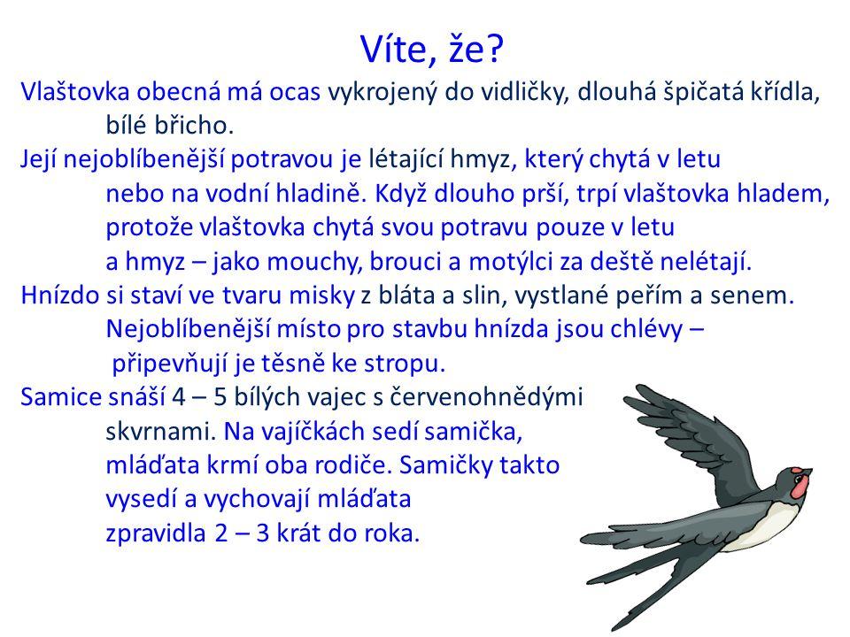 Víte, že. Vlaštovka obecná má ocas vykrojený do vidličky, dlouhá špičatá křídla, bílé břicho.