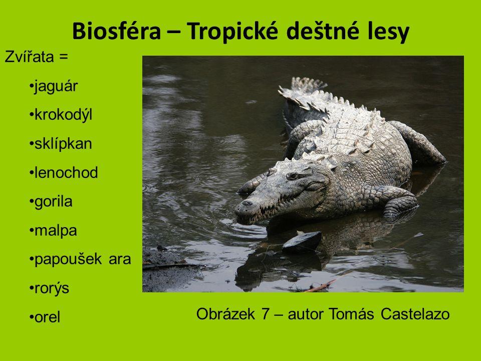 Biosféra – Tropické deštné lesy Zvířata = jaguár krokodýl sklípkan lenochod gorila malpa papoušek ara rorýs orel obrázek 6