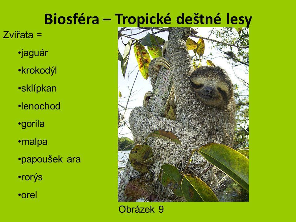 Biosféra – Tropické deštné lesy Zvířata = jaguár krokodýl sklípkan lenochod vřešťan gorila malpa papoušek ara rorýs orel Obrázek 8 – autor Brocken Inaglory