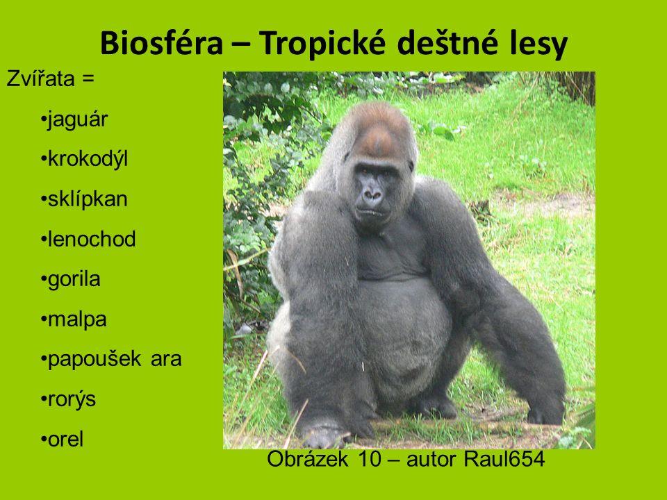 Biosféra – Tropické deštné lesy Zvířata = jaguár krokodýl sklípkan lenochod gorila malpa papoušek ara rorýs orel Obrázek 9