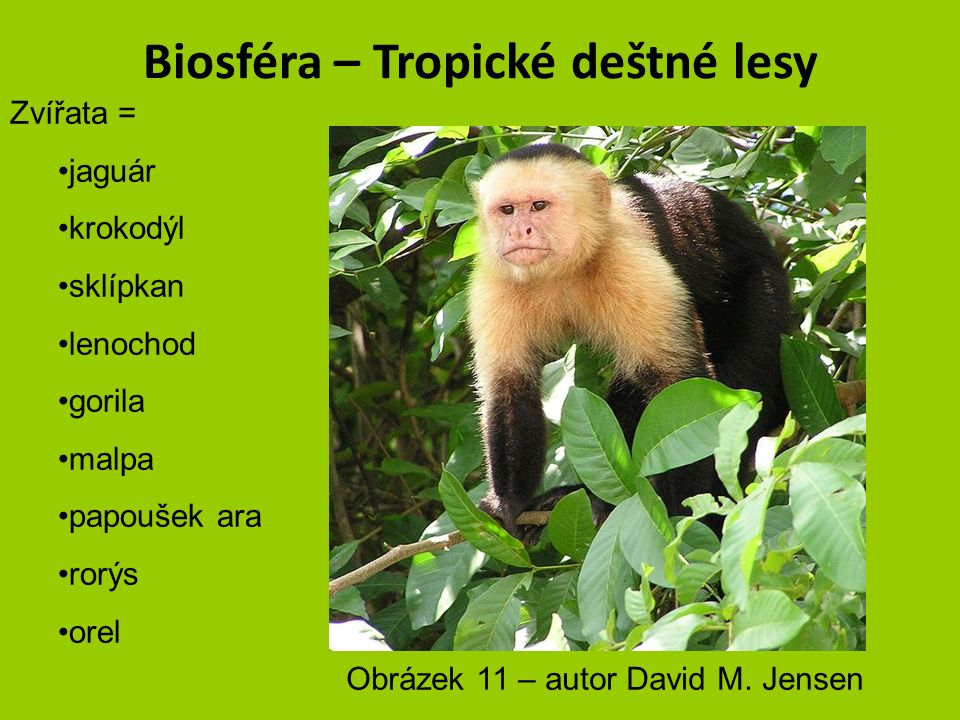Biosféra – Tropické deštné lesy Zvířata = jaguár krokodýl sklípkan lenochod gorila malpa papoušek ara rorýs orel Obrázek 10 – autor Raul654