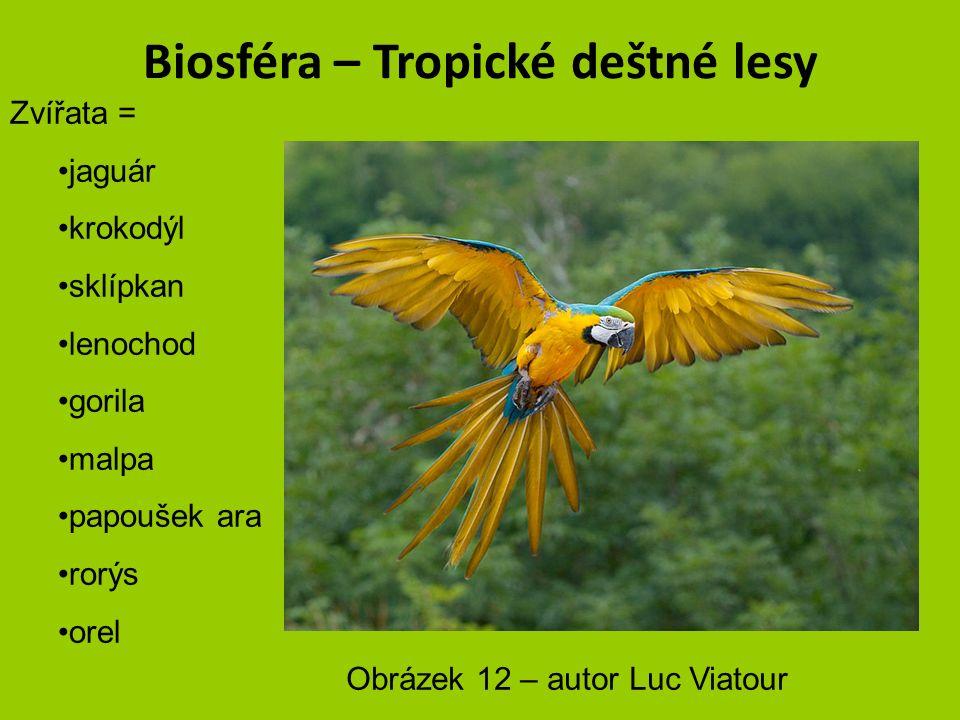 Biosféra – Tropické deštné lesy Zvířata = jaguár krokodýl sklípkan lenochod gorila malpa papoušek ara rorýs orel Obrázek 11 – autor David M. Jensen
