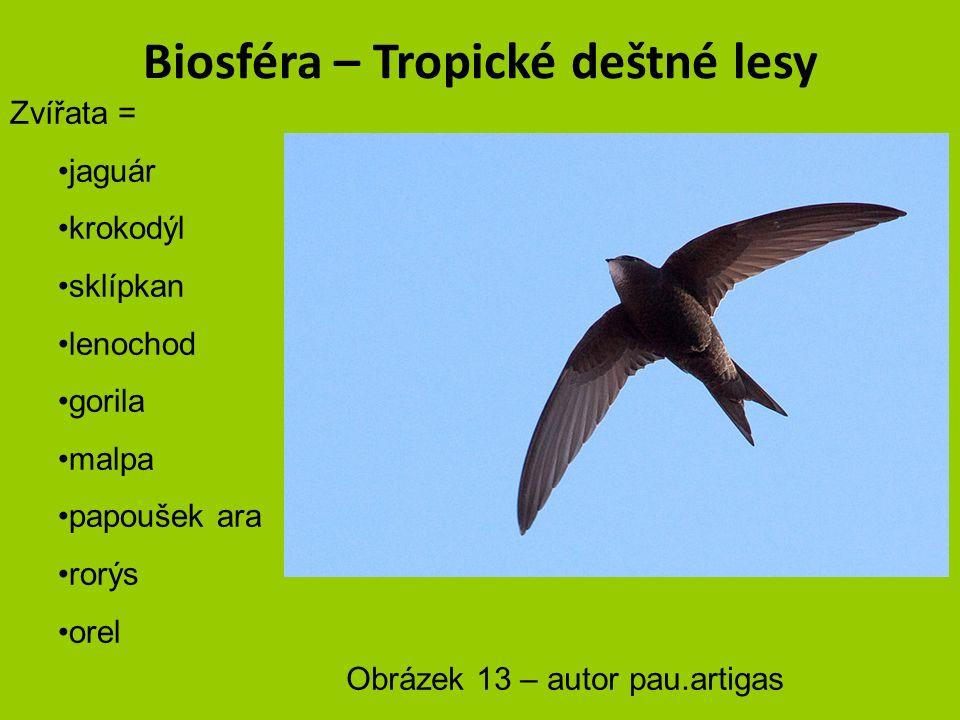 Biosféra – Tropické deštné lesy Zvířata = jaguár krokodýl sklípkan lenochod gorila malpa papoušek ara rorýs orel Obrázek 12 – autor Luc Viatour