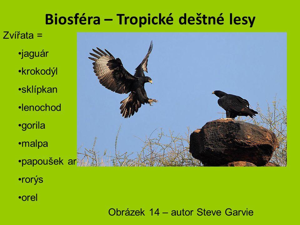 Biosféra – Tropické deštné lesy Zvířata = jaguár krokodýl sklípkan lenochod gorila malpa papoušek ara rorýs orel Obrázek 13 – autor pau.artigas