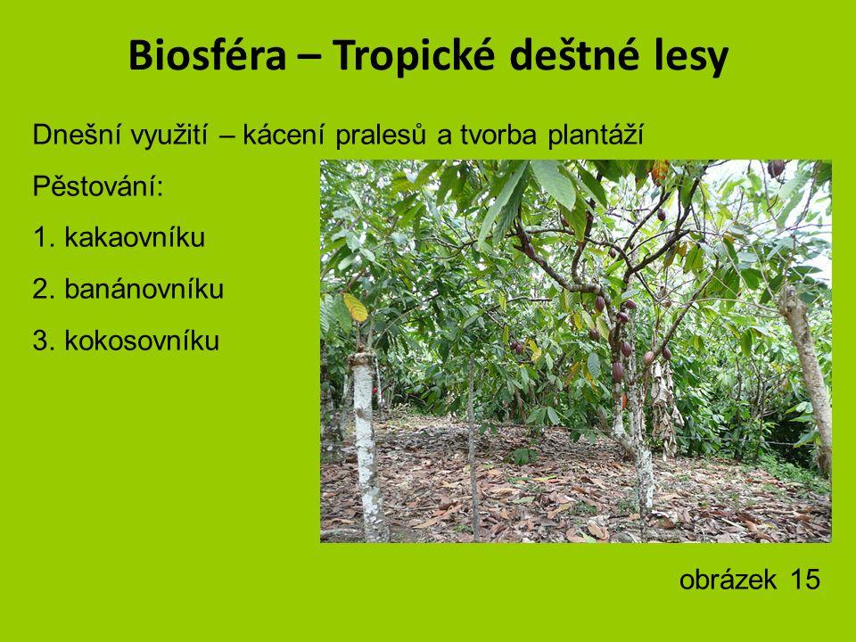Biosféra – Tropické deštné lesy Zvířata = jaguár krokodýl sklípkan lenochod gorila malpa papoušek ara rorýs orel Obrázek 14 – autor Steve Garvie
