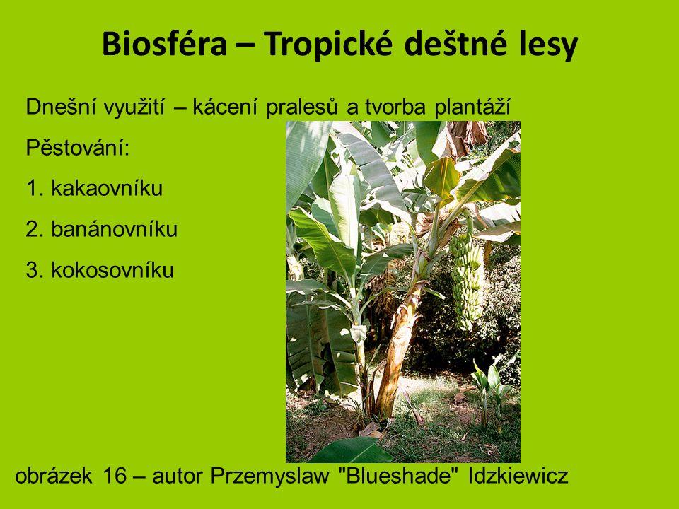 Biosféra – Tropické deštné lesy Dnešní využití – kácení pralesů a tvorba plantáží Pěstování: 1.kakaovníku 2.banánovníku 3.kokosovníku obrázek 15