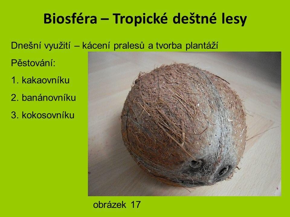 Biosféra – Tropické deštné lesy Dnešní využití – kácení pralesů a tvorba plantáží Pěstování: 1.kakaovníku 2.banánovníku 3.kokosovníku obrázek 16 – aut