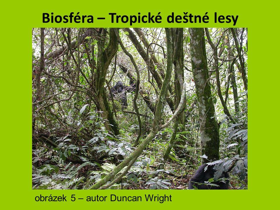 Biosféra – Tropické deštné lesy VEGETACE = listnaté stromy liány palmy 2/3 všech známých rostlinných druhů obrázek 3 - autor Makemake obrázek 4