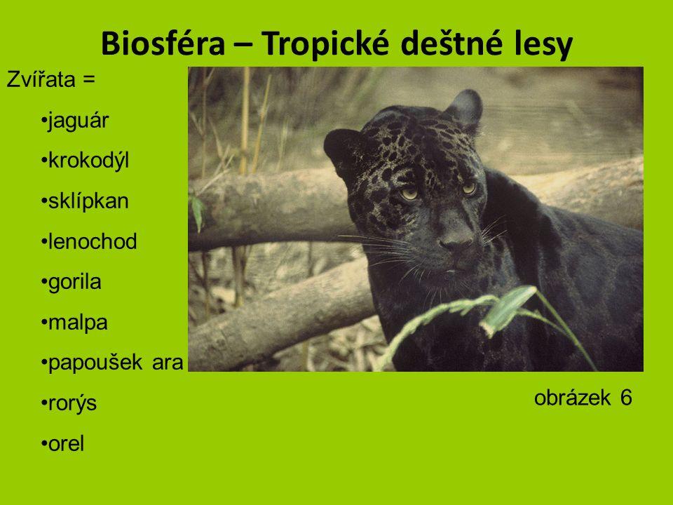 Biosféra – Tropické deštné lesy obrázek 5 – autor Duncan Wright
