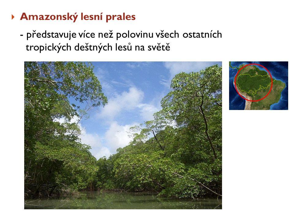  Amazonský lesní prales - představuje více než polovinu všech ostatních tropických deštných lesů na světě