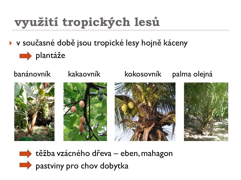 využití tropických lesů  v současné době jsou tropické lesy hojně káceny plantáže banánovník kakaovník kokosovník palma olejná těžba vzácného dřeva –