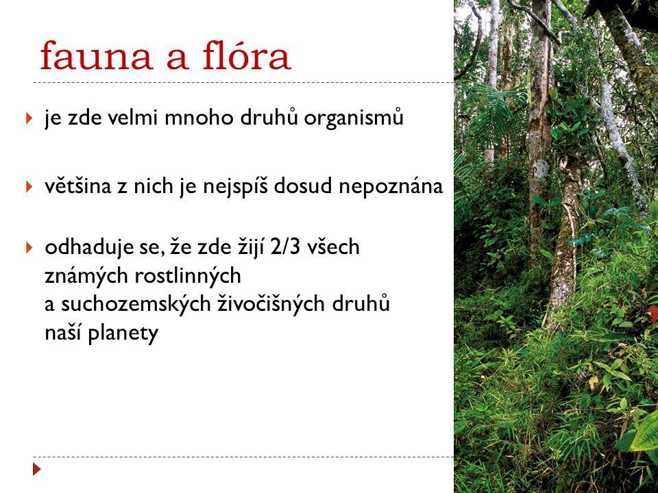 fauna a flóra  je zde velmi mnoho druhů organismů  většina z nich je nejspíš dosud nepoznána  odhaduje se, že zde žijí 2/3 všech známých rostlinnýc