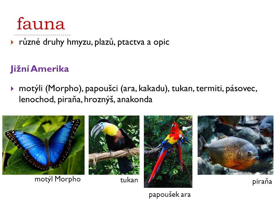fauna  různé druhy hmyzu, plazů, ptactva a opic Jižní Amerika  motýli (Morpho), papoušci (ara, kakadu), tukan, termiti, pásovec, lenochod, piraňa, h