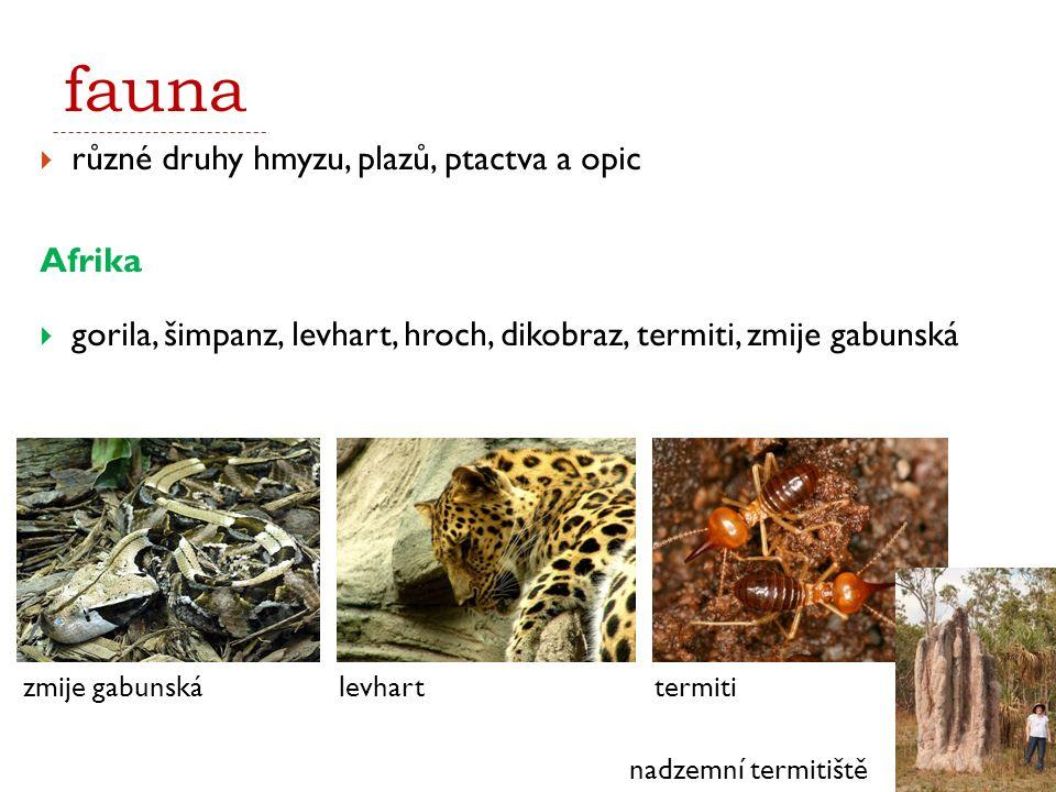 fauna  různé druhy hmyzu, plazů, ptactva a opic Afrika  gorila, šimpanz, levhart, hroch, dikobraz, termiti, zmije gabunská zmije gabunskálevhart nad
