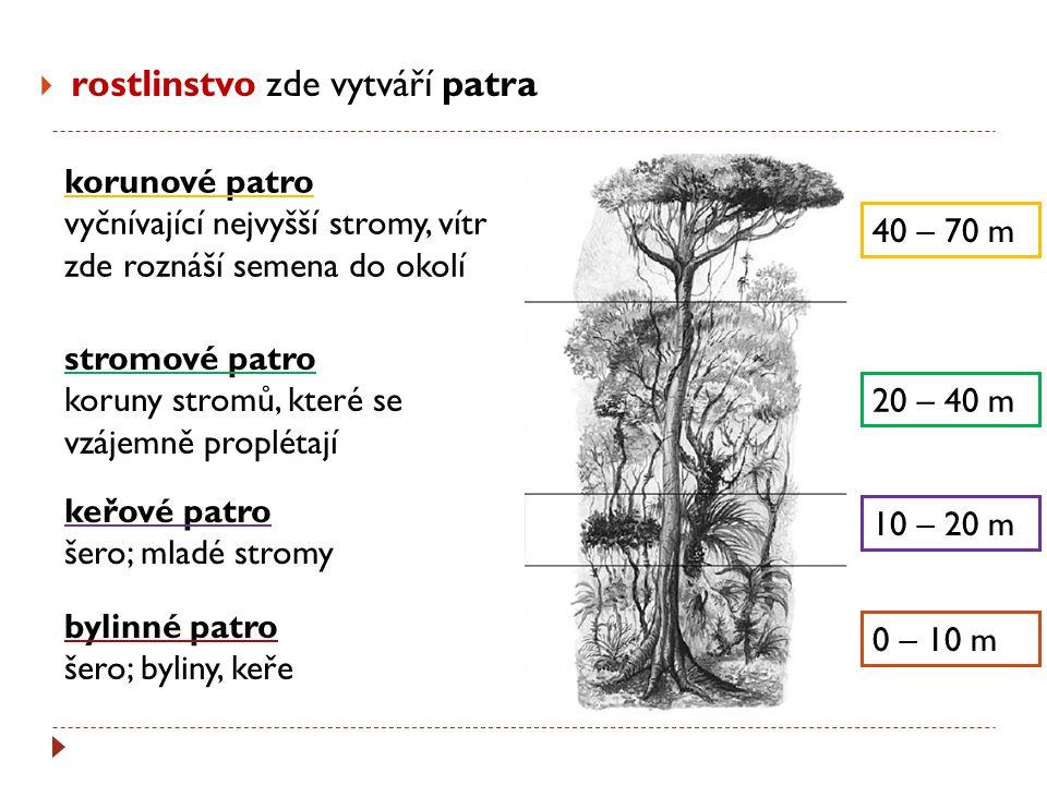 rostlinstvo zde vytváří patra 40 – 70 m 20 – 40 m 10 – 20 m 0 – 10 m korunové patro vyčnívající nejvyšší stromy, vítr zde roznáší semena do okolí st