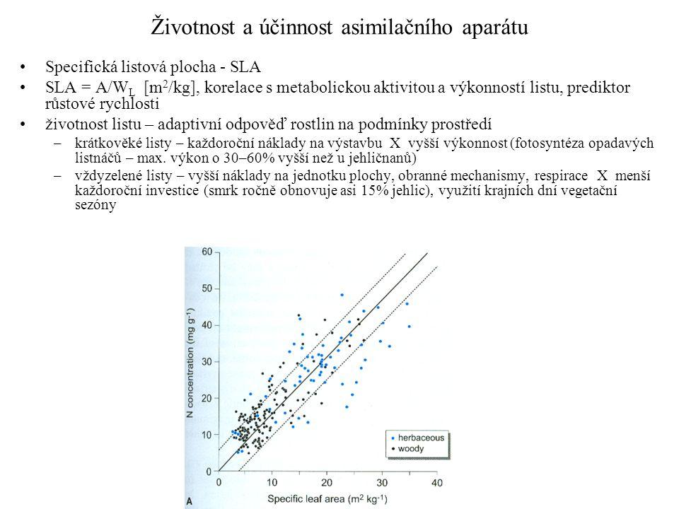 Životnost a účinnost asimilačního aparátu Specifická listová plocha - SLA SLA = A/W L [m 2 /kg], korelace s metabolickou aktivitou a výkonností listu, prediktor růstové rychlosti životnost listu – adaptivní odpověď rostlin na podmínky prostředí –krátkověké listy – každoroční náklady na výstavbu X vyšší výkonnost (fotosyntéza opadavých listnáčů – max.