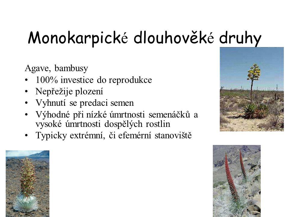 Monokarpick é dlouhověk é druhy Agave, bambusy 100% investice do reprodukce Nepřežije plození Vyhnutí se predaci semen Výhodné při nízké úmrtnosti semenáčků a vysoké úmrtnosti dospělých rostlin Typicky extrémní, či efemérní stanoviště