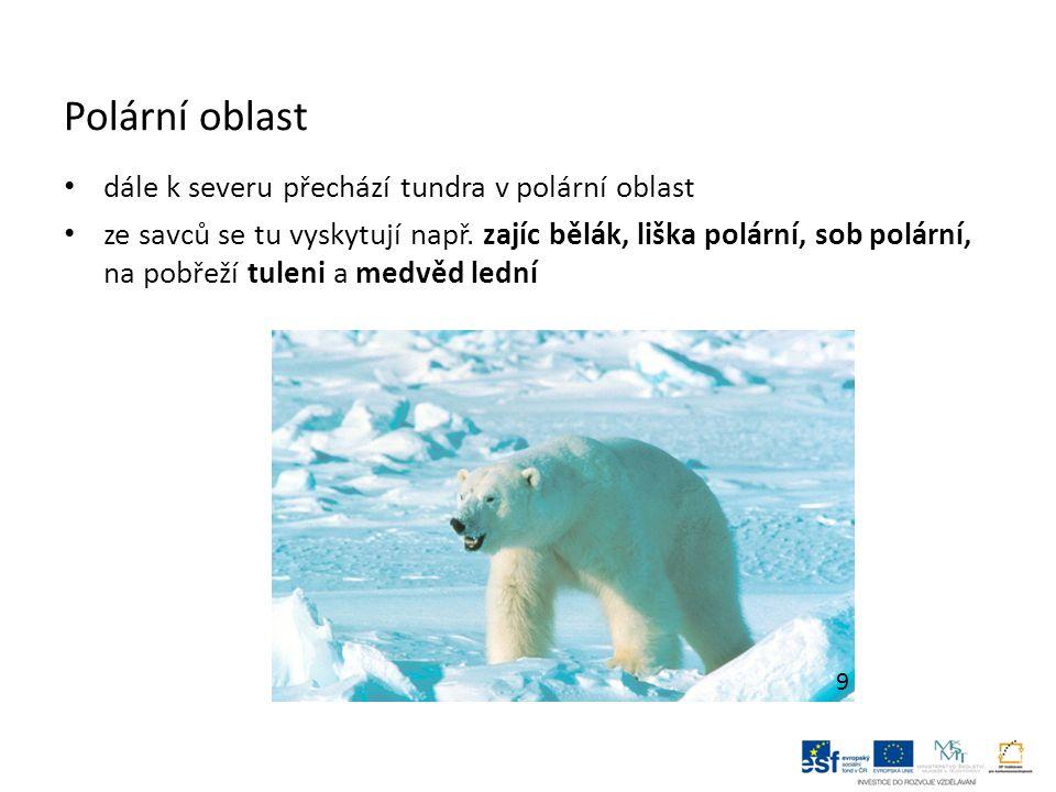 Polární oblast dále k severu přechází tundra v polární oblast ze savců se tu vyskytují např. zajíc bělák, liška polární, sob polární, na pobřeží tulen