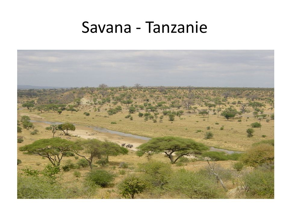 Savana - Tanzanie