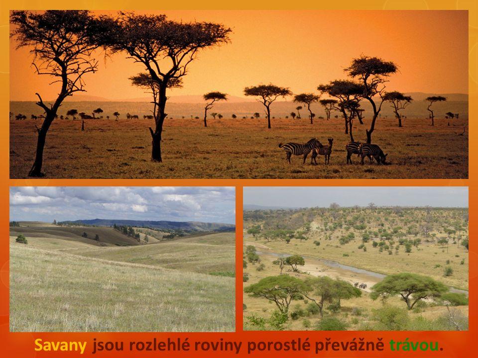 - Rostliny savany (flóra): - traviny s roztroušenými stromy - akácie - baobab - blahovičník