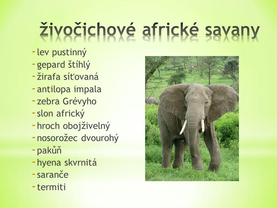 - lev pustinný - gepard štíhlý - žirafa síťovaná - antilopa impala - zebra Grévyho - slon africký - hroch obojživelný - nosorožec dvourohý - pakůň - hyena skvrnitá - saranče - termiti