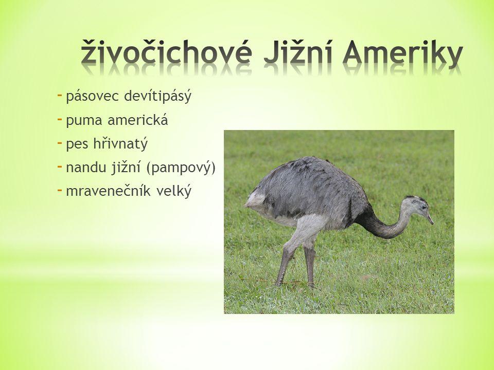 - pásovec devítipásý - puma americká - pes hřivnatý - nandu jižní (pampový) - mravenečník velký