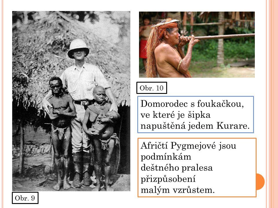 Obr. 9 Obr. 10 Afričtí Pygmejové jsou podmínkám deštného pralesa přizpůsobení malým vzrůstem.